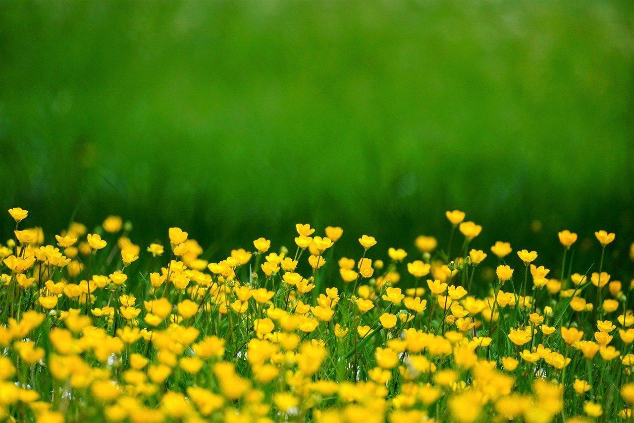 Fleurs des champs : les 20 plus belles fleurs