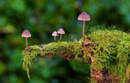 Champignons comestibles : la liste complète des champignons qui peuvent se manger