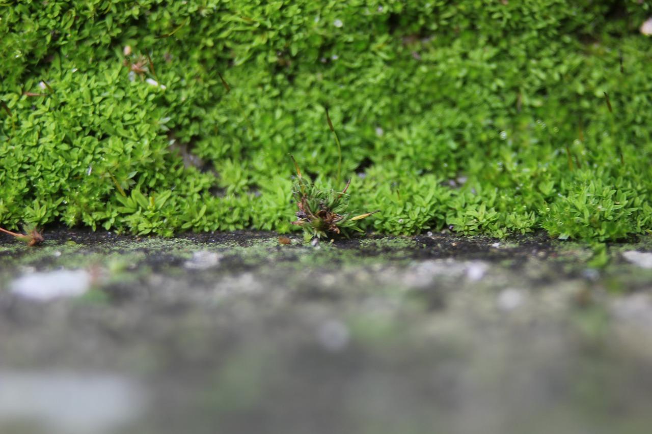 Créer un Mur Végétal Intérieur : Comment faire ?